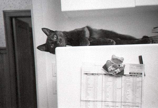 Alex Waterhouse-Hayward: A Cool Cat, A Dead Cat, The Shag